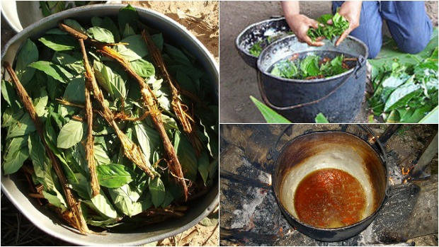 Ayahuasca-preparation-and-cooking.-All-images-Wikimedia-Commons
