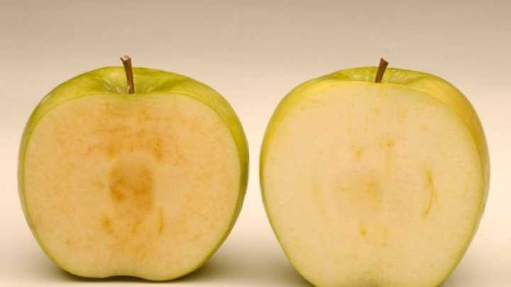 na-pazarot-stignuva-gmo-jabolko-otporno-na-potemnuvanje