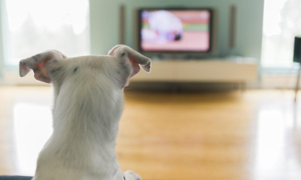 shto-vsushnost-gledaat-kuchinjata-vo-televizor