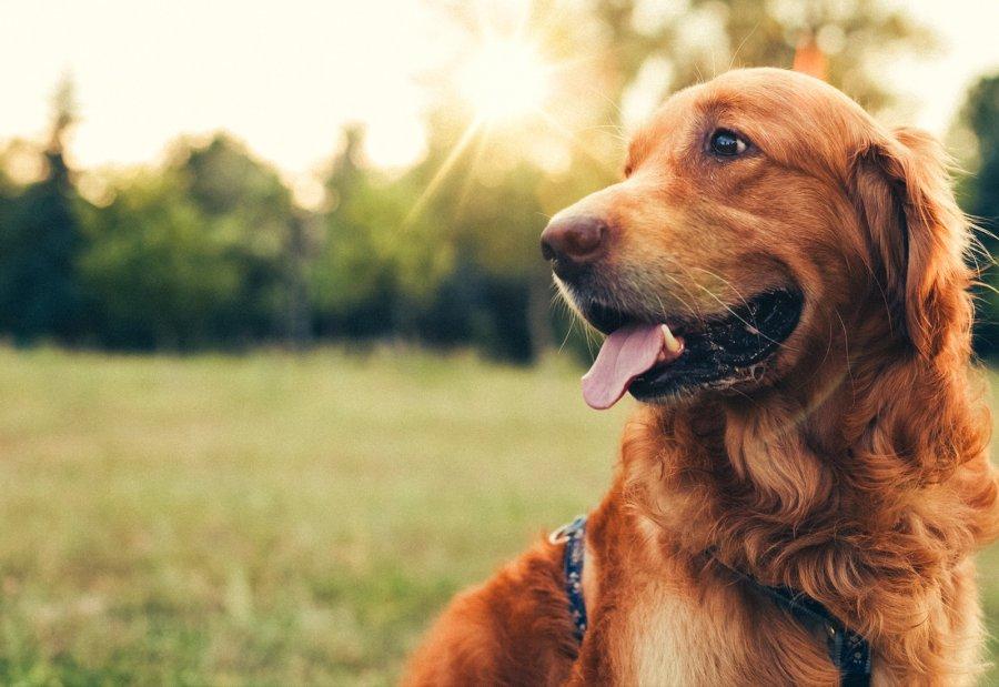 Науката вели дека кучињата се попаметни од мачките