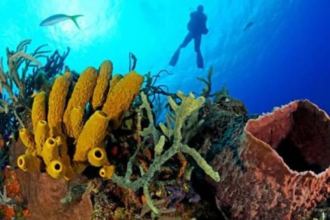 Морскиот сунѓер е најстариот жив организам на светот