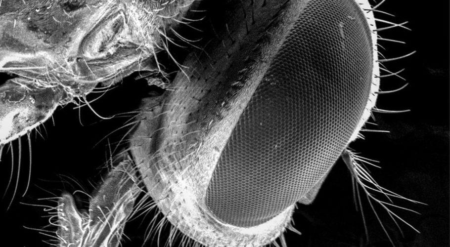 Не јадете храна на која застанала мува бидејќи мувите ги носат најопасните бактерии