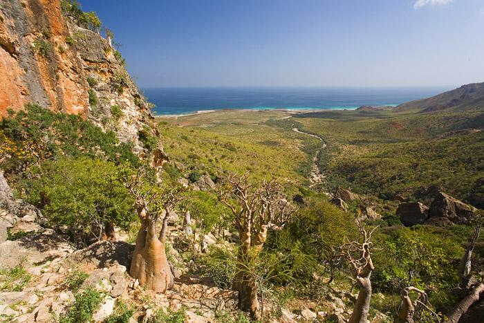 Socotra-Island-–-Yemen