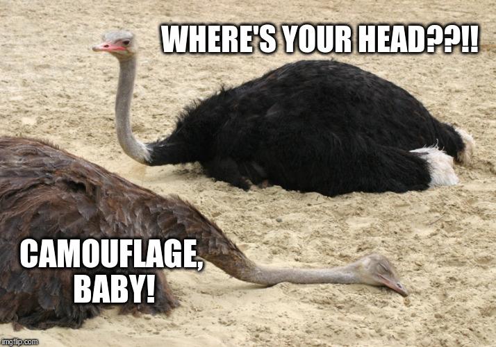 sleeping_ostrich