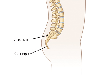 Lateral view of the lumbar spine, sacrum, and coccyx. *Derived from Exit Writer base art: 115761_Layers.psd. References and research: 1. KDAL #4A11836 2. Photographic reference