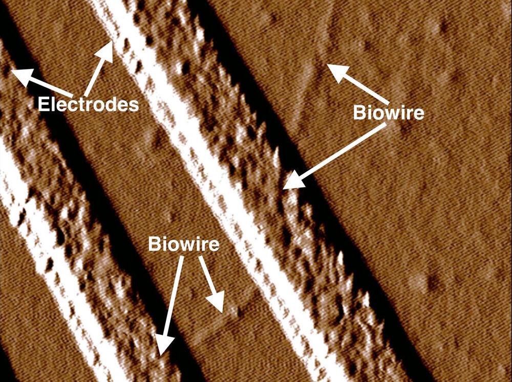 biowire2