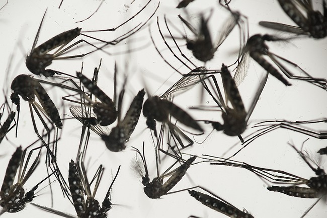 how-does-zika-spread-utah-infection-raises-questions-071816