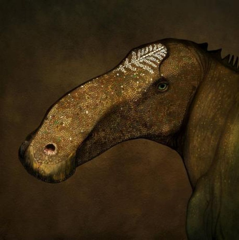 Undated handout illustration courtesy of paleoartist John Conway shows the Probrachylophosaurus bergei dinosaur. REUTERS/Courtesy of John Conway/Handout via Reuters