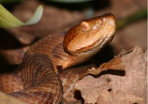 well-14-dockery-snake-bites-feature-image-02-610x428